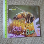 EGG to BEE (Life Cycles)