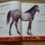 Horses Dictionary (An A to Z Horses) thumbnail 5