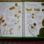 First Garden Activity Book (With FREE Seed Collecting Envelopes and Stickers) thumbnail 7
