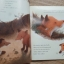 Foxes in the Snow (Paperback) thumbnail 5