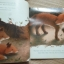 Foxes in the Snow (Paperback) thumbnail 4