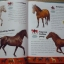 Horses Dictionary (An A to Z Horses) thumbnail 7