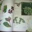 The Ultimate GARDENING Book thumbnail 9