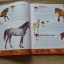 Horses Dictionary (An A to Z Horses) thumbnail 6