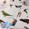 Early Learning Flash Cards - Birds