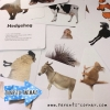 Early Learning Flash Cards - Domestic Animals