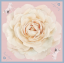 Vintage Rose - Early Pink Blossom thumbnail 1