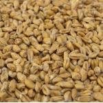 Pale Wheat Malt 1lb
